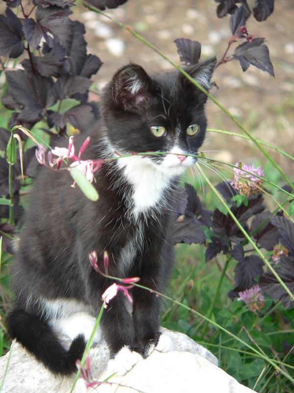 Soins-pour-animaux-animal-domestiques-animaux-de-compagnie-chats-chiens